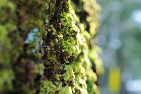 kuban: moss-grown boulders of Rock Devil finger