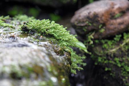 anomalous: moss-grown boulders of Rock Devil finger