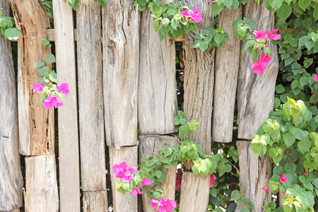 Flowers on a wooden fence photo