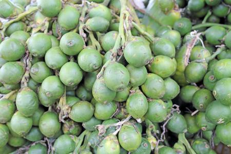 Betel nut , Areca palm