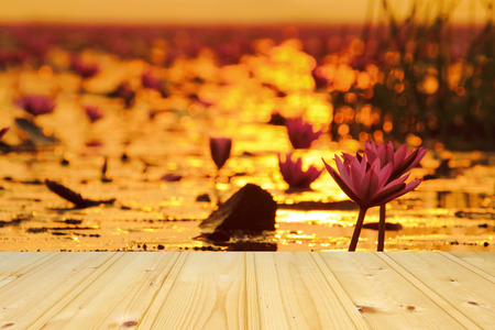 nympha: Sea of pink lotus with empty wooden