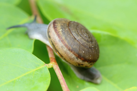shinning leaves: Snail Shell in nature
