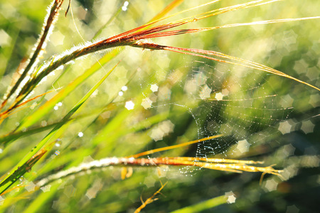 Closeup of spiritual  and  blurry grass with water droplets. photo