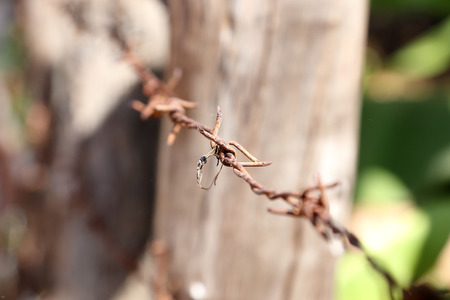 barbed wire: Old Barbed wire