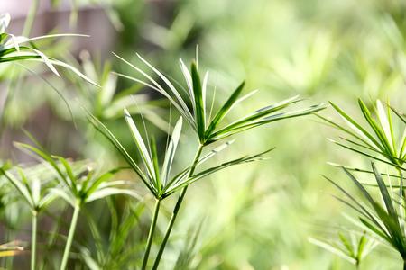 forest background: Green leaf background