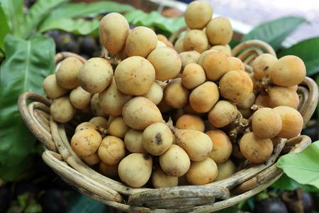 lanzones: Lanzones fruit or Longkong