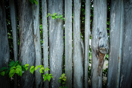 picket green: wooden fence overgrown with green leaf.Vintage style. Stock Photo