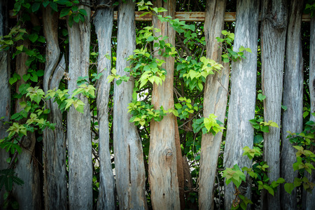 overgrown: wooden fence overgrown with green leaf.Vintage style. Stock Photo