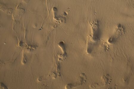 footsteps: footsteps in sandy on the beach Stock Photo