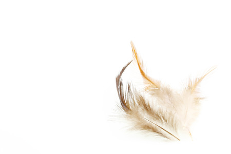 feather on a white background.for design. Stock Photo