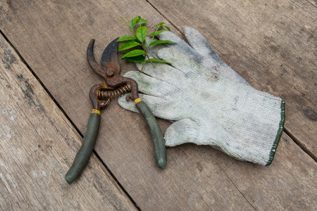 replant: Gardening tools on old wooden background Stock Photo