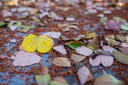 dry leaves: Dry leaves background Stock Photo