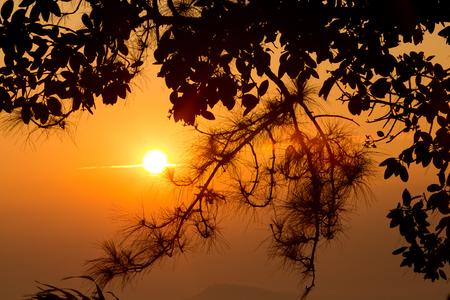 range of motion: beautiful sunlight and fog at phu ruea in loei province thailand