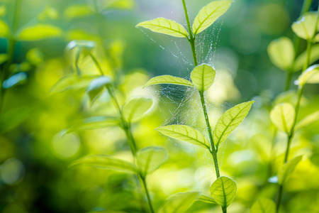 Close Up Beautiful spider web on green leaves. Stock Photo