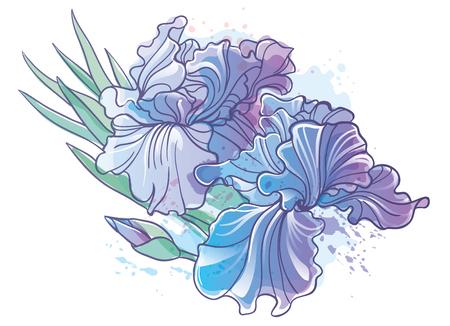 Vector Iris flower illustration Illustration