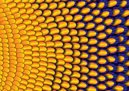 illustration of vivid bird feather texture
