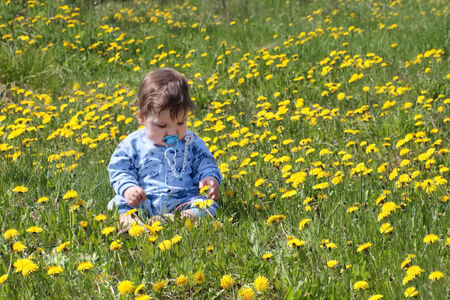 Baby in blue sits on beautiful green meadow with yellow dandelions at sunny day  photo