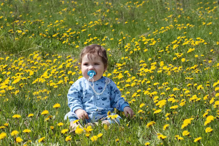 Baby with pacifier sits on beautiful green meadow with yellow dandelions photo