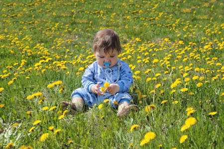 Baby with pacifier holds flowers and sits on green meadow with yellow dandelions photo