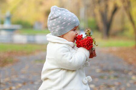 rowanberry: Little cute girl in white eats red rowanberry in autumn park