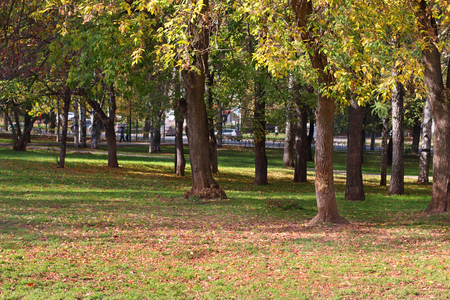 fenced in: Trees in in fenced park among grass and yellow leaves in autumn day