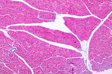 Tissue of pancreas is an organ of the digestive system and endocrine system of in humans, under the microscopic for education in laboratory.
