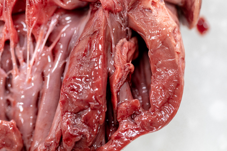 Concept of Education anatomy and physiology of heart in laboratory.