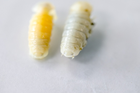 Isopoda (class Crustacea), Isopods live in the sea, in fresh water, Isopods have a chitinous exoskeleton and jointed limbs for education in Lab. Imagens
