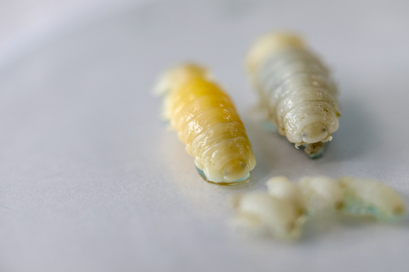 Isopoda (class Crustacea), Isopods live in the sea, in fresh water, Isopods have a chitinous exoskeleton and jointed limbs for education in Lab. Banco de Imagens