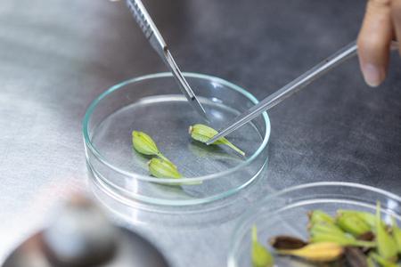 Plant tissue culture techniques in laboratory.