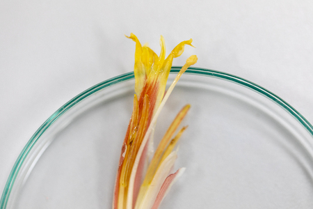 Study of flowering and fruit structures for education in laboratory. Banco de Imagens
