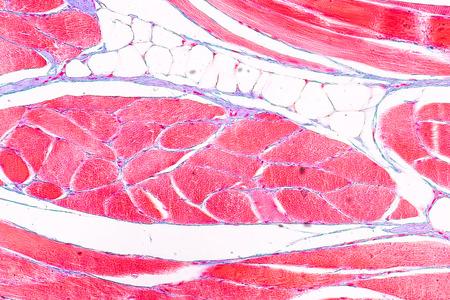 Educación anatomía y fisiología de la lengua bajo el microscopio en laboratorio.