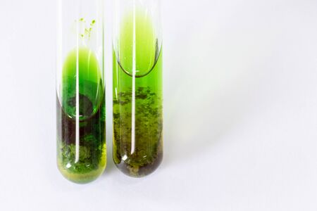 Study of Chromatography is used to separate components of a plant. Фото со стока