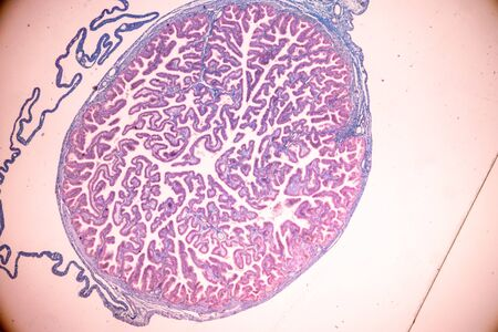 Education of Uterine tube under the microscope in Lab.