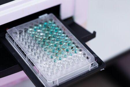 Untersuchung der Zusammensetzung von Fischblut, wissenschaftliche Forschung mit 96-Well-Mikrotiterplatte für Labortests.