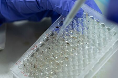 Study of fish blood composition, Science research with 96 wells microplate for laboratory testing.
