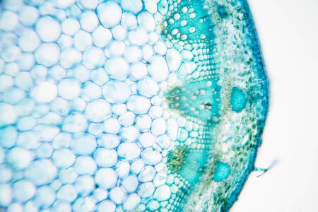 Close up Plant Stem under the microscope for classroom education.