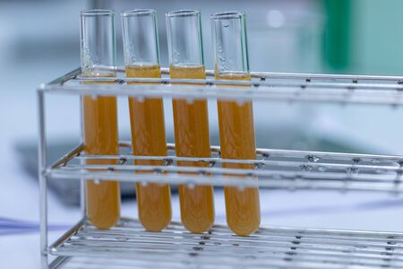 Biodiesel production is the process of producing the biofuel, biodiesel, in laboratory. Archivio Fotografico