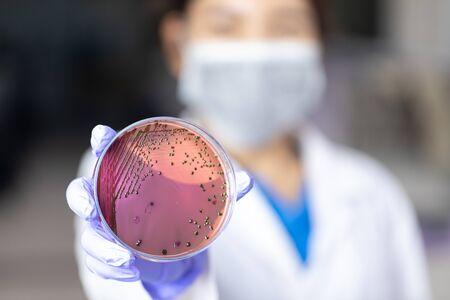 Analyse et étude du vaccin de la maladie à Coronavirus (CoV) en laboratoire. Banque d'images