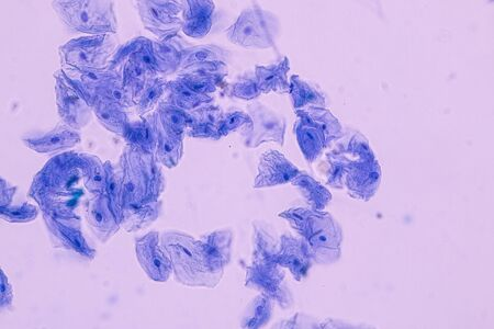 Education anatomy and Histological sample of Human under the microscope. Banque d'images