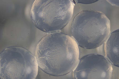 alginate is a cell wall component of marine brown algae for education in Laboratory.