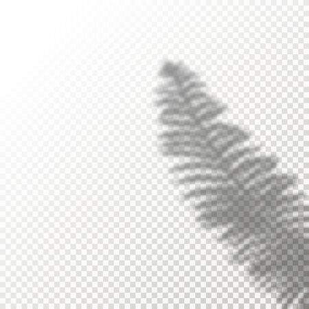 Shadow Overlay Plant Vector Mockup. Shadows overlay effects Of A leaf on blue background in a modern minimalist style.  イラスト・ベクター素材