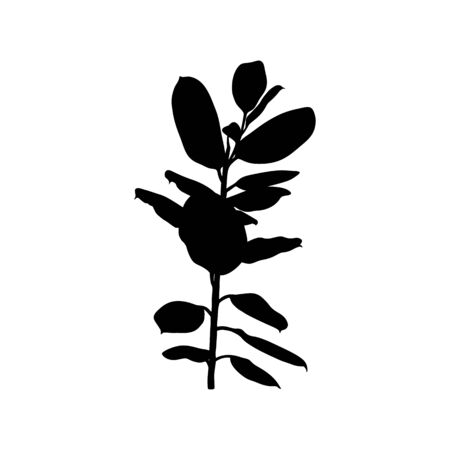 Black Ficus Tropical plant Silhouette isolated on white background. Vector Illustration.