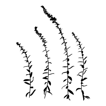 Silhouette of a plant branch. Vector monochrome floral illustration of herbs isolated on white background.