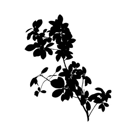 Black Ficus Benjamin plant Silhouette isolated on white background. Vector Illustration. Çizim