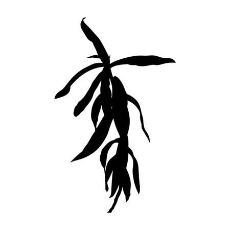 Silhouette of a houseplant. Vector monochrome floral illustration of a plant isolated on a white background.