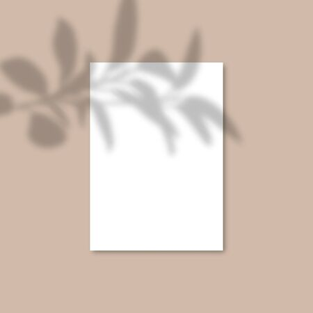 Shadow Overlay Plant Vector Mockup A4 Paper sheets. Shadows overlay effects Of A leaf on pink background in a modern minimalist style