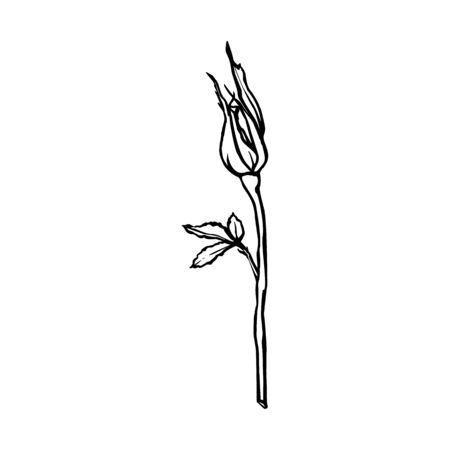 Rose Flower line drawing. Vector contour rosebud in a Trendy Minimalist Style.
