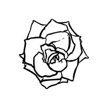 Rose Flower line drawing. Vector outline drawing art in a Trendy Minimalist Style. Çizim