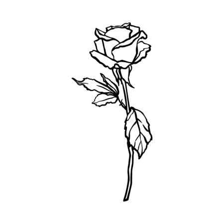 Rosebud line drawing. Vector outline Flower in a Trendy Minimalist Style.